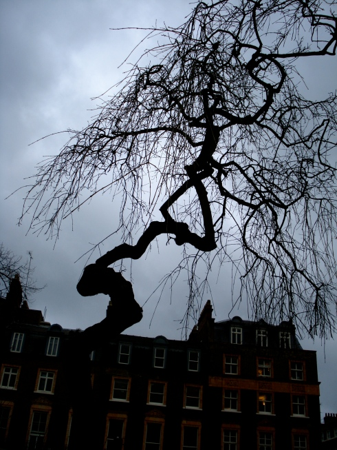 russell square tree
